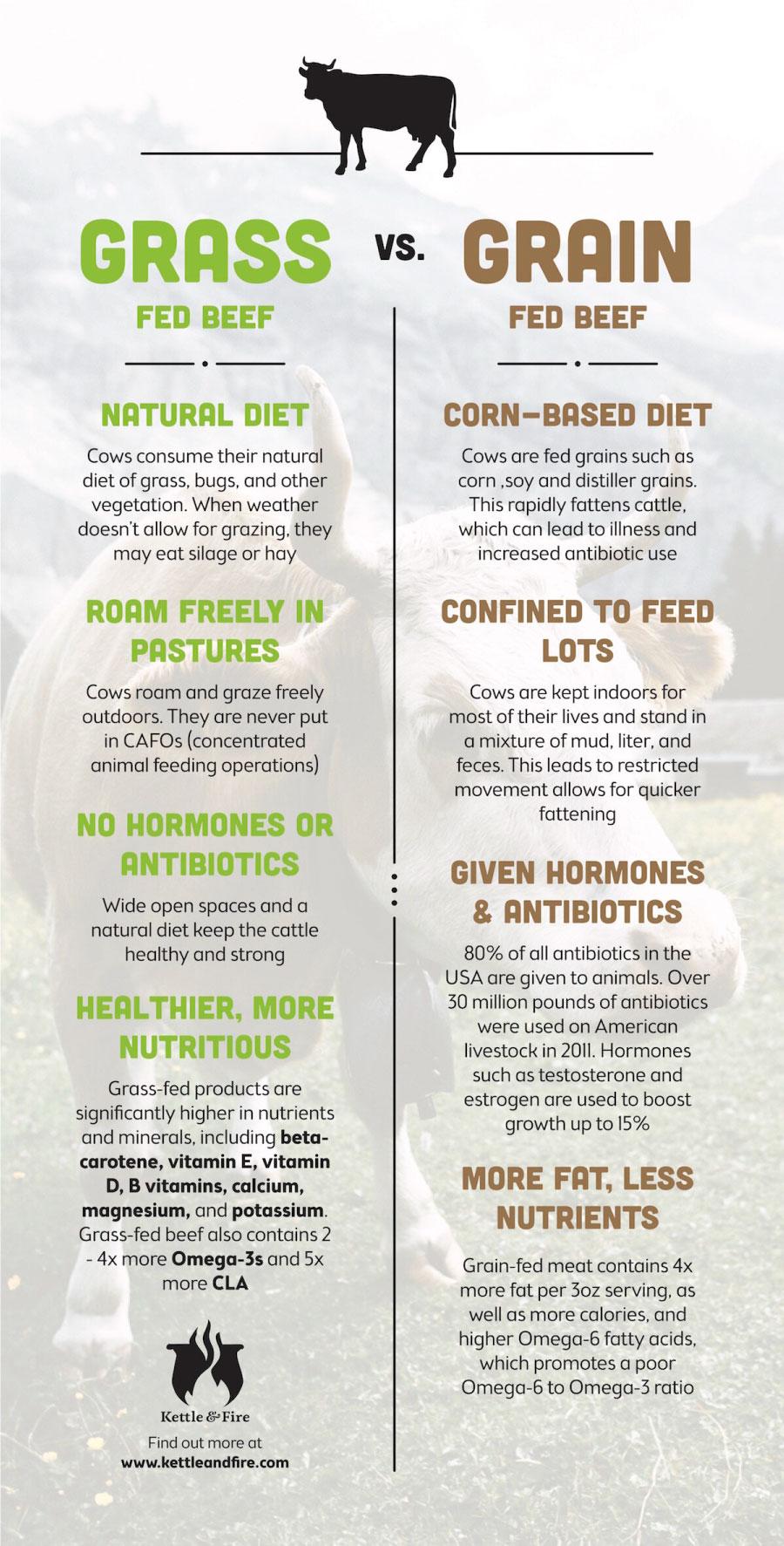 Good-Hope-Cattle-Grass-Fed-Beef-vs-Grain-Fed-Beef